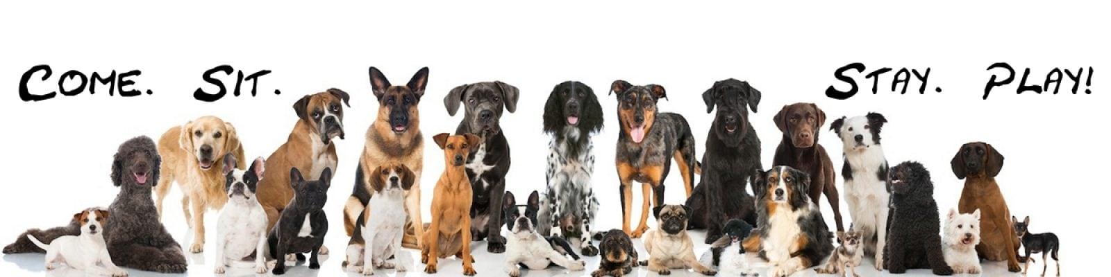 Hundetrener Altea